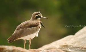 sakleshpur weekend getaway bird photography