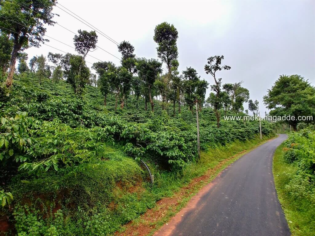 Mekanagadde Estate Scenic Beauty and Road