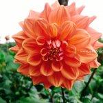 Mekanagadde Homestay Flower 1