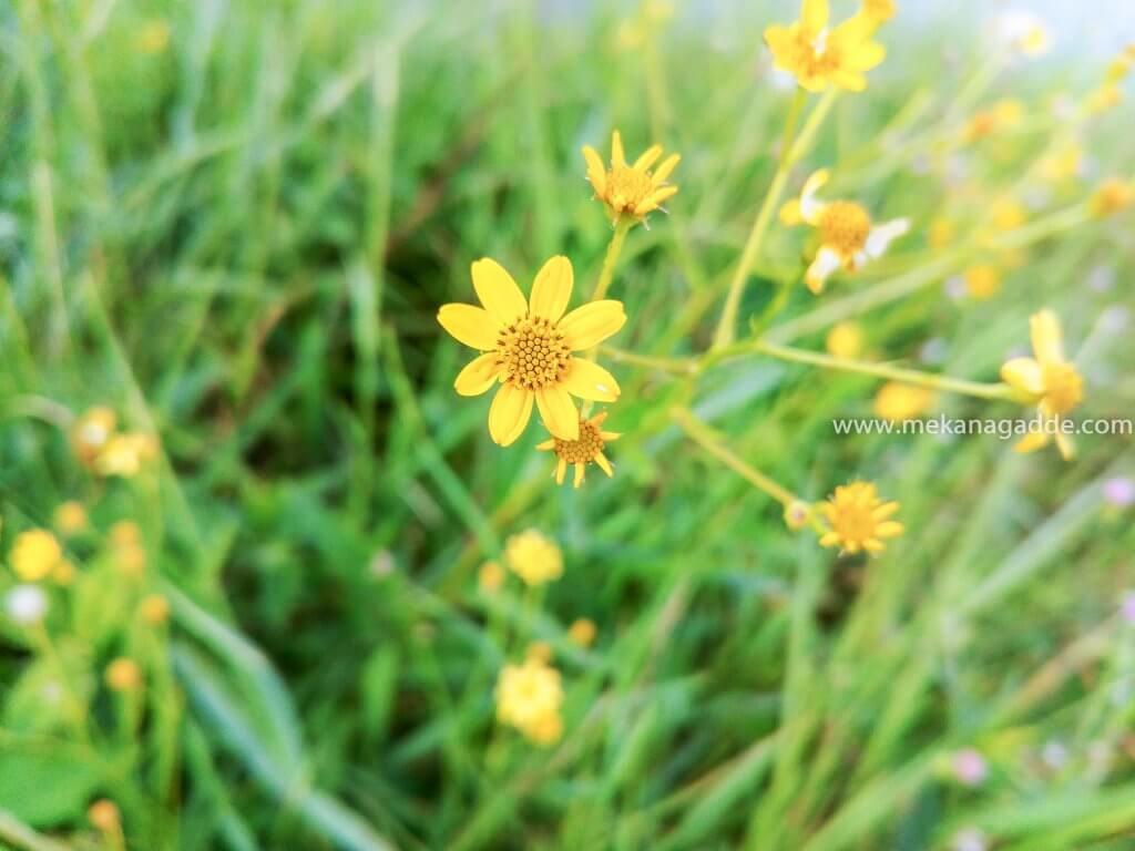 Eco Tourism Flower